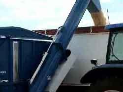 Grain Buggy Unloading